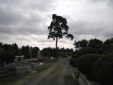 多摩霊園のウィンディ