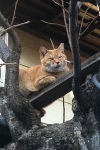 中村八幡神社のねこ、獲物をねらう