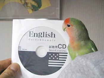 コザクラインコ パピネン殿下 (17).JPG