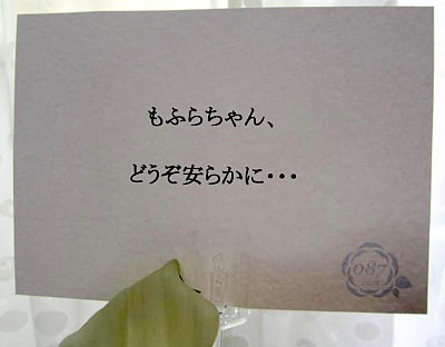 モフラ フラワー (5).JPG