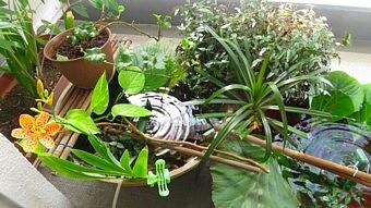 葉っぱを置くだけのビオトープベランダ