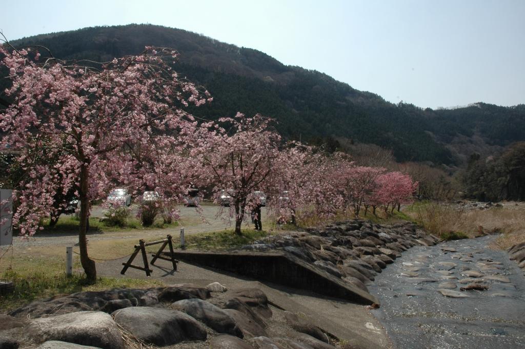黒保根運動公園桜