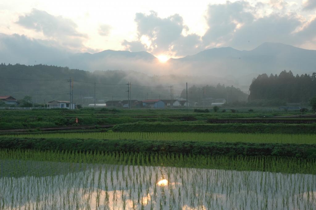 上野田植え後