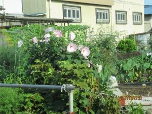 羽村市名前のわからない花