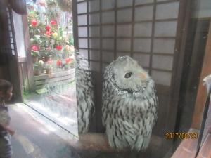 富士宮花鳥園
