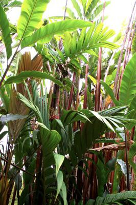 hawaii41.jpg