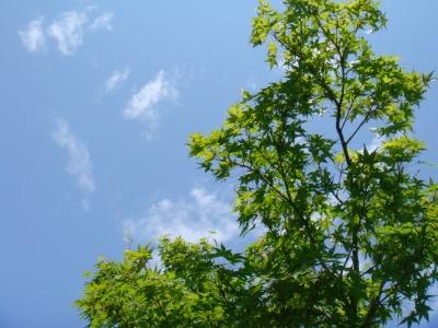白鳥庭園2