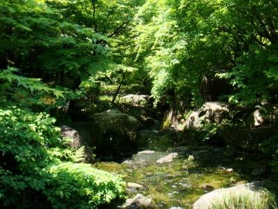 白鳥庭園4