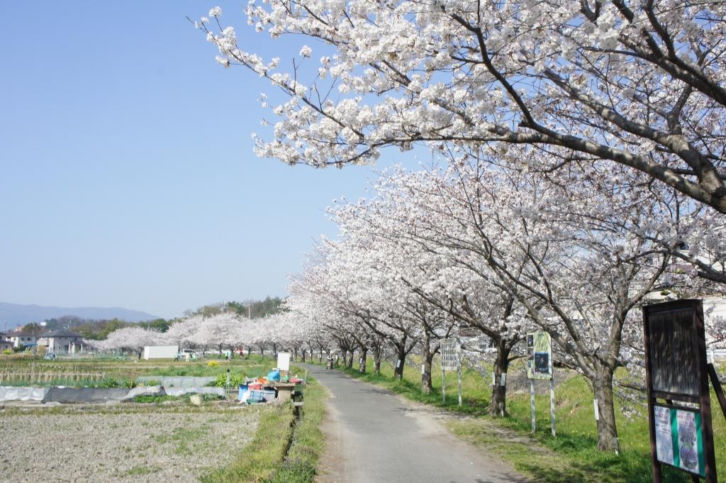 奈良市美容師募集 時給1000円以上 時給1100円以上 時給1200円以上 アシスタント