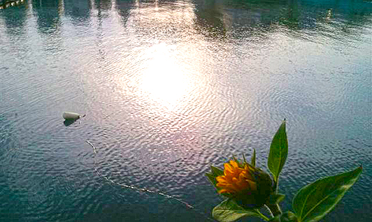 向日葵日和