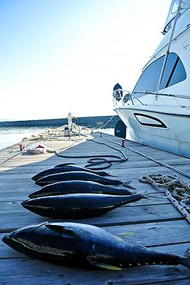 週末の釣果。