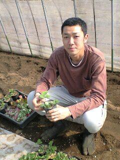 イチゴを作る中村さん