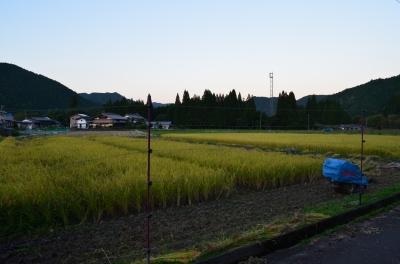 稲刈り_1