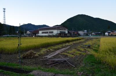 稲刈り_2