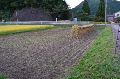 稲刈り_3