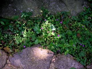 野草木漏れ日に咲く