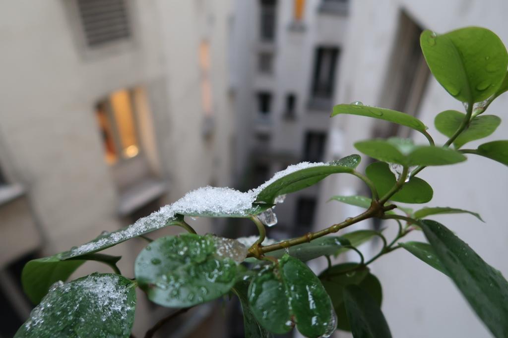 二月の雪 paris