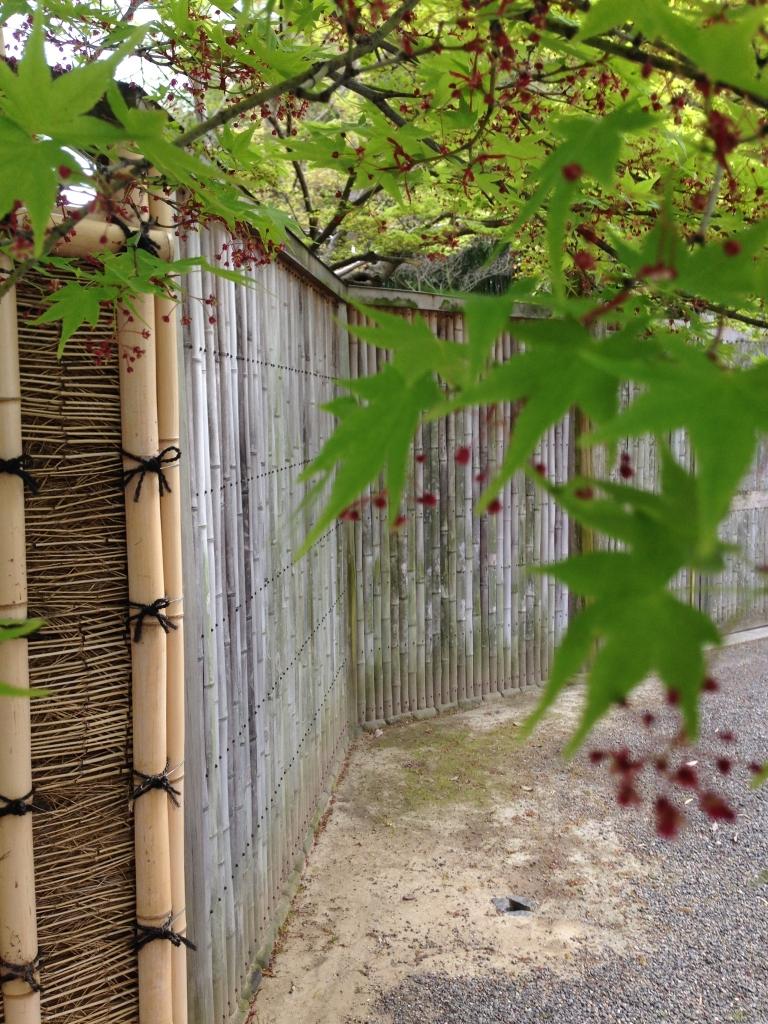 新緑 kyoto