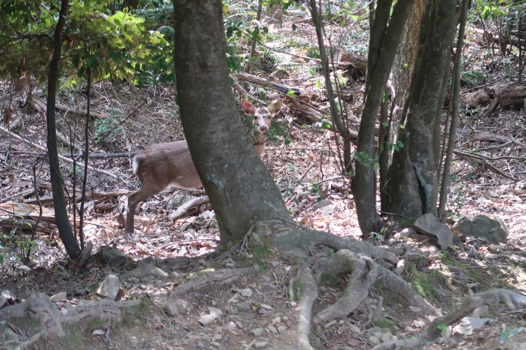 鹿ケ谷 kyoto