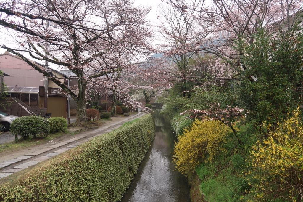 我らのオリンピック kyoto