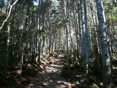 地蔵尾根樹林帯