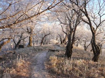 午前中の樹氷
