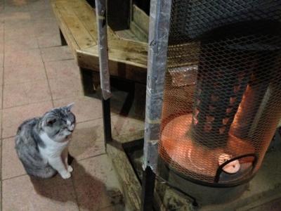 尊仏猫とストーブ