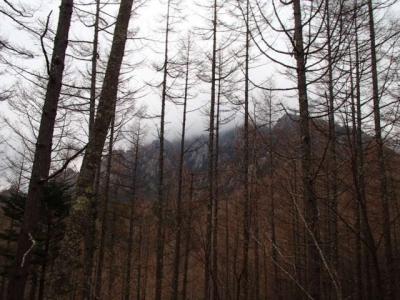 曇りの瑞牆山