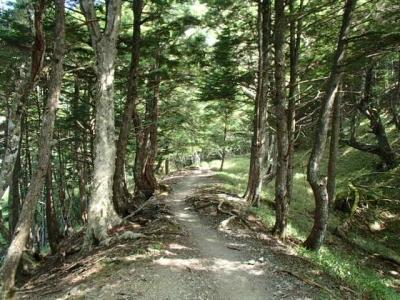 樹林帯杖立峠まで