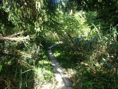 途中高低差の無い樹林帯