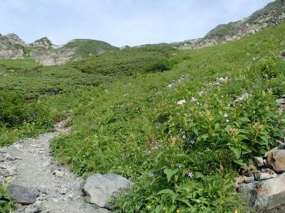 赤石岳分岐下のお花畑
