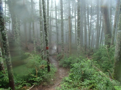 樹林帯の下山道