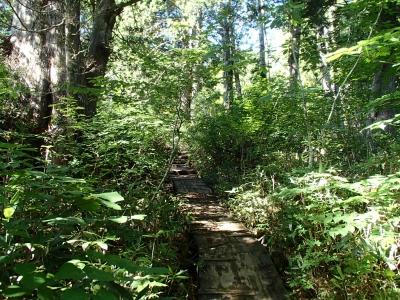 至仏山樹林帯