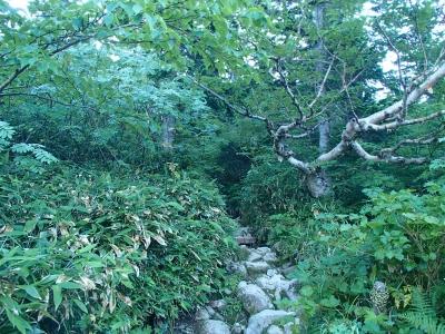 始めは樹林帯