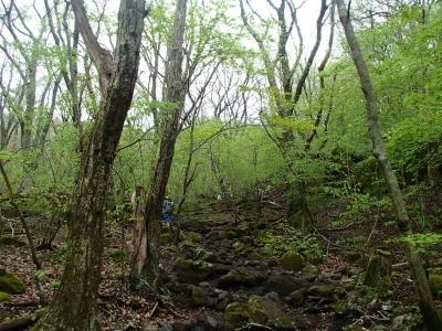 九州自然歩道.JPG
