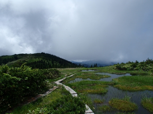 草原状の湿地.JPG