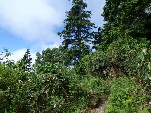 長い樹林帯.JPG