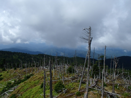 枯れ木帯.JPG