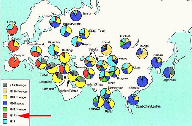 東アジア人のY染色体DNAタイプ