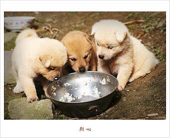 わんこ 食事