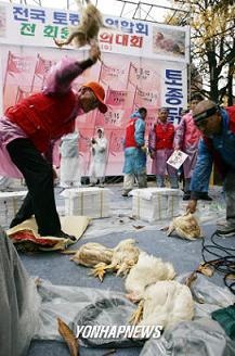 韓国 抗議デモ 鶏を叩きつけて殺す