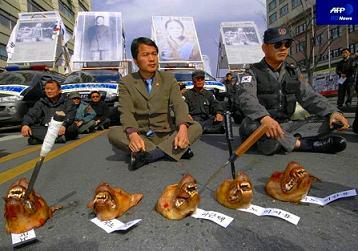韓国 抗議デモ 犬の頭