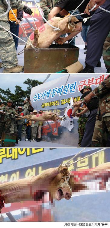 韓国 抗議デモ 豚八つ裂き