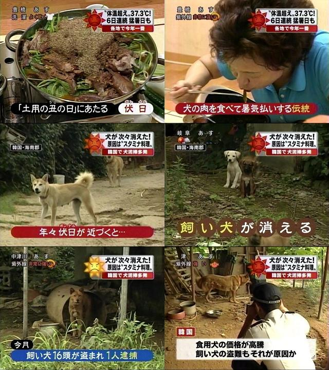 韓国 伏日 犬窃盗