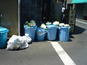 韓国 キムチ キャベツ 生ゴミ 汚物