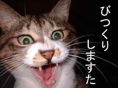 猫 ネコ ねこ ぬこ びっくりしますた