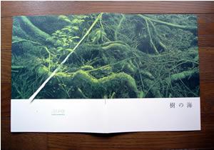 『樹海』のパンフレット表紙