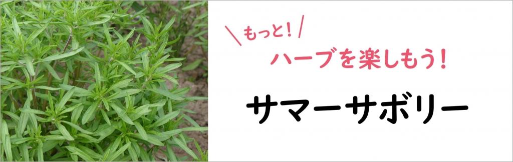サマーサボリーの有機種子