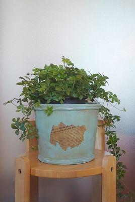 鉢カバー2