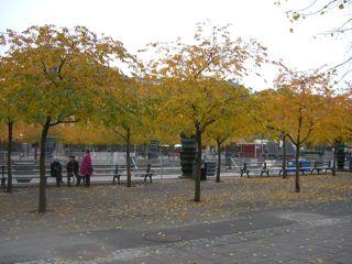 秋のさくら